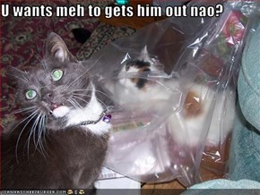 U wants meh to gets him out nao?