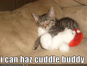 i can haz cuddle buddy
