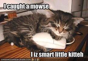I caught a mowse