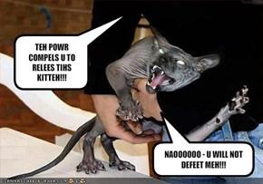 TEH POWR COMPELS U TO RELEES TIHS KITTEH!!!