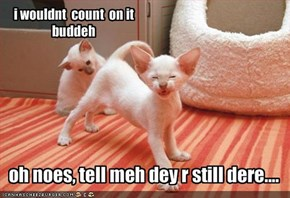 oh noes, tell meh dey r still dere....
