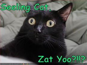 Seeling Cat,             Zat Yoo?!!?