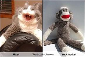 kitteh Totally Looks Like sock monkeh