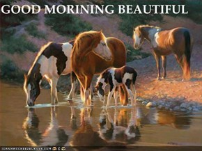 GOOD MORINING BEAUTIFUL