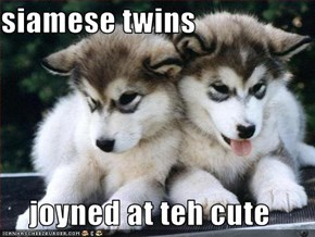 siamese twins  joyned at teh cute