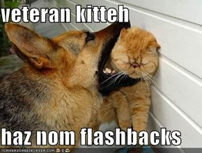 veteran kitteh  haz nom flashbacks