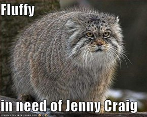 Fluffy  in need of Jenny Craig
