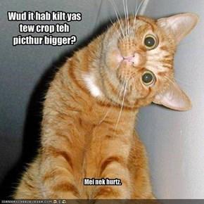 Wud it hab kilt yas tew crop teh picthur bigger?
