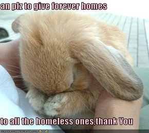 an plz to give forever homes  to all the homeless ones,thank You