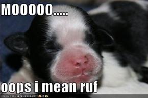 MOOOOO.....  oops i mean ruf