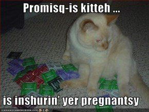 Promisq-is kitteh ...  is inshurin' yer pregnantsy