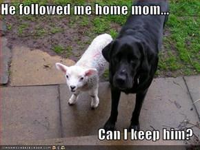 He followed me home mom...  Can I keep him?
