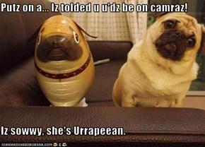 Putz on a... Iz tolded u u'dz be on camraz!  Iz sowwy, she's Urrapeean.