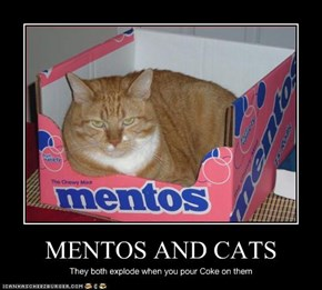 MENTOS AND CATS