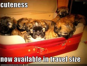 cuteness  now available in travel size