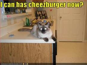 I can has cheezburger now?