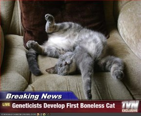 Breaking News      - Geneticists Develop First Boneless Cat