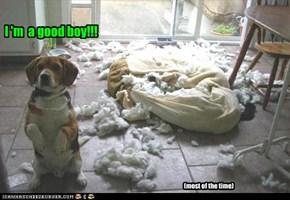 I 'm  a good boy!!!