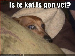 Is te kat is gon yet?