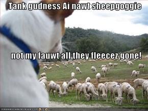 Tank gudness Ai nawt sheepgoggie not my fauwt all they fleecez gone!