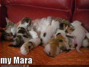 my Mara