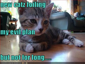 new catz foiling my evil plan but not for long.....