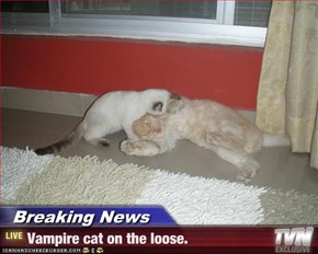 Breaking News - Vampire cat on the loose.