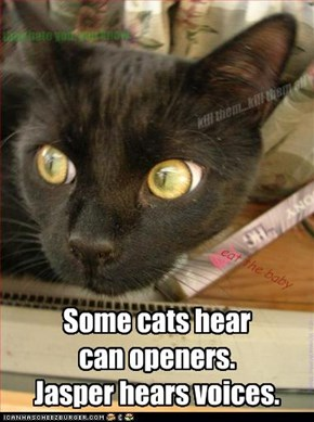 Some cats hear  can openers. Jasper hears voices.