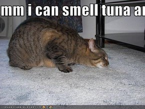 mm i can smell tuna and sardine