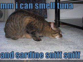 mm i can smell tuna   and sardine sniff sniff