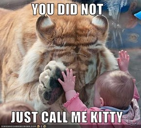 YOU DID NOT  JUST CALL ME KITTY