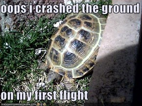oops i crashed the ground  on my first flight