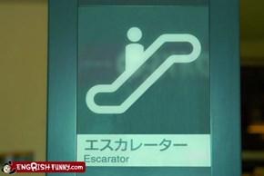 Escarator