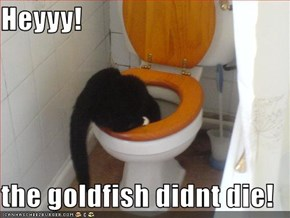 Heyyy!   the goldfish didnt die!