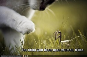 You bring your doom upon yourself, feline.