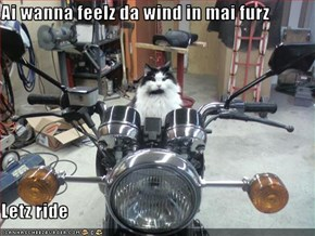 Ai wanna feelz da wind in mai furz  Letz ride