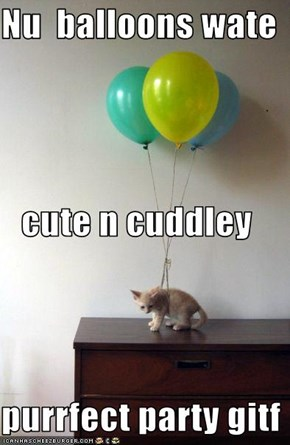 Nu  balloons wate cute n cuddley purrfect party gitf