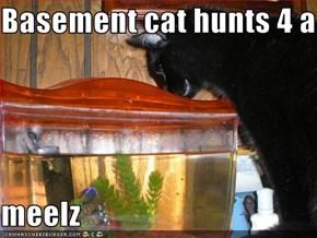 Basement cat hunts 4 a   meelz