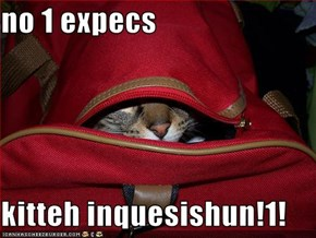 no 1 expecs  kitteh inquesishun!1!