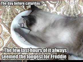 The day before caturday...
