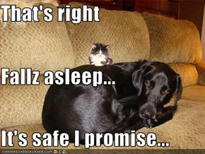 That's right Fallz asleep... It's safe I promise...