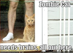 Zombie Cat  needs brains, all out here.