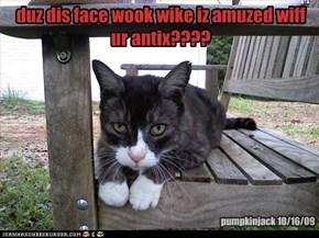 duz dis face wook wike iz amuzed wiff ur antix????