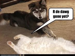 R de dawg gone yet?