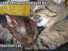 sad cat is watched over by  thortfull cat