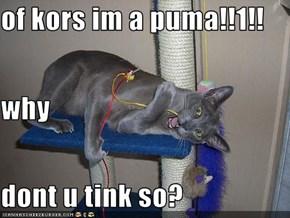 of kors im a puma!!1!! why dont u tink so?