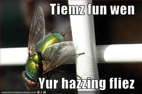 Tiemz fun wen    Yur hazzing fliez