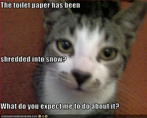 The toilet paper has been shredded into snow? What do you expect me to do about it?
