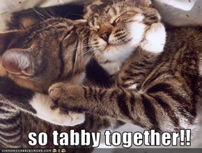 so tabby together!!