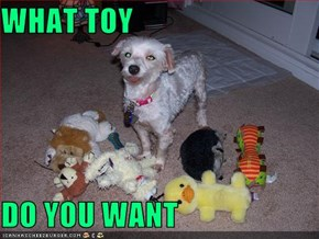 WHAT TOY  DO YOU WANT